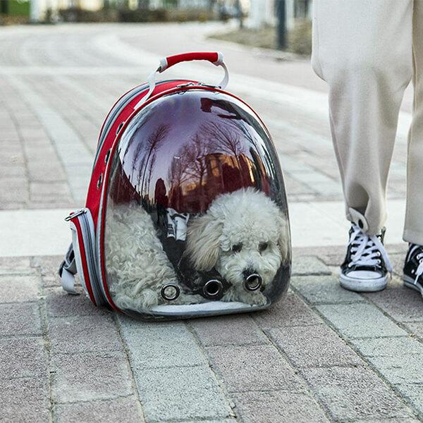 pet backpack carrier